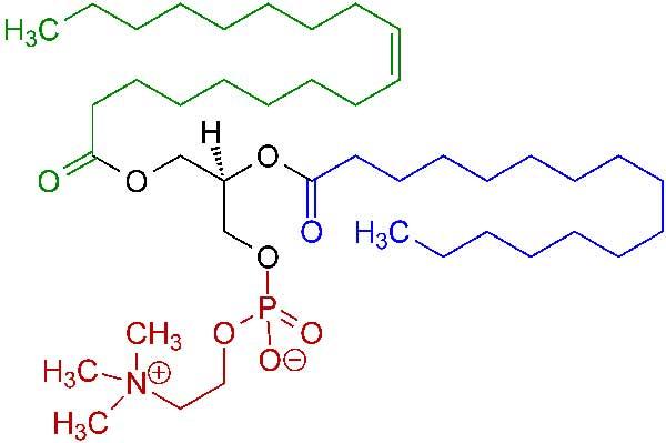 Super Lecithin 1200mg la thuốc gì? Có tốt không?